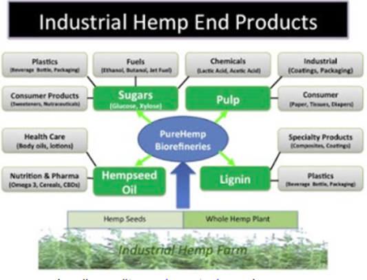 The Rebirth of Industrial Hemp:   Processing and Bio-refineries