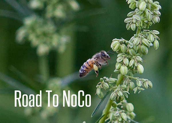 Road to NoCo Hemp Expo